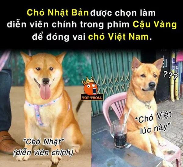 """Cư dân mạng thi nhau chế ảnh chú chó Shiba – diễn viên chính thủ vai """"cậu Vàng"""" của Lão Hạc"""